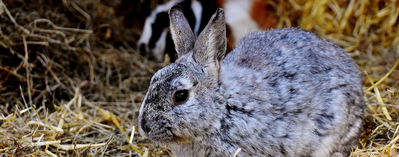 Kaninchen-Stroh-Header