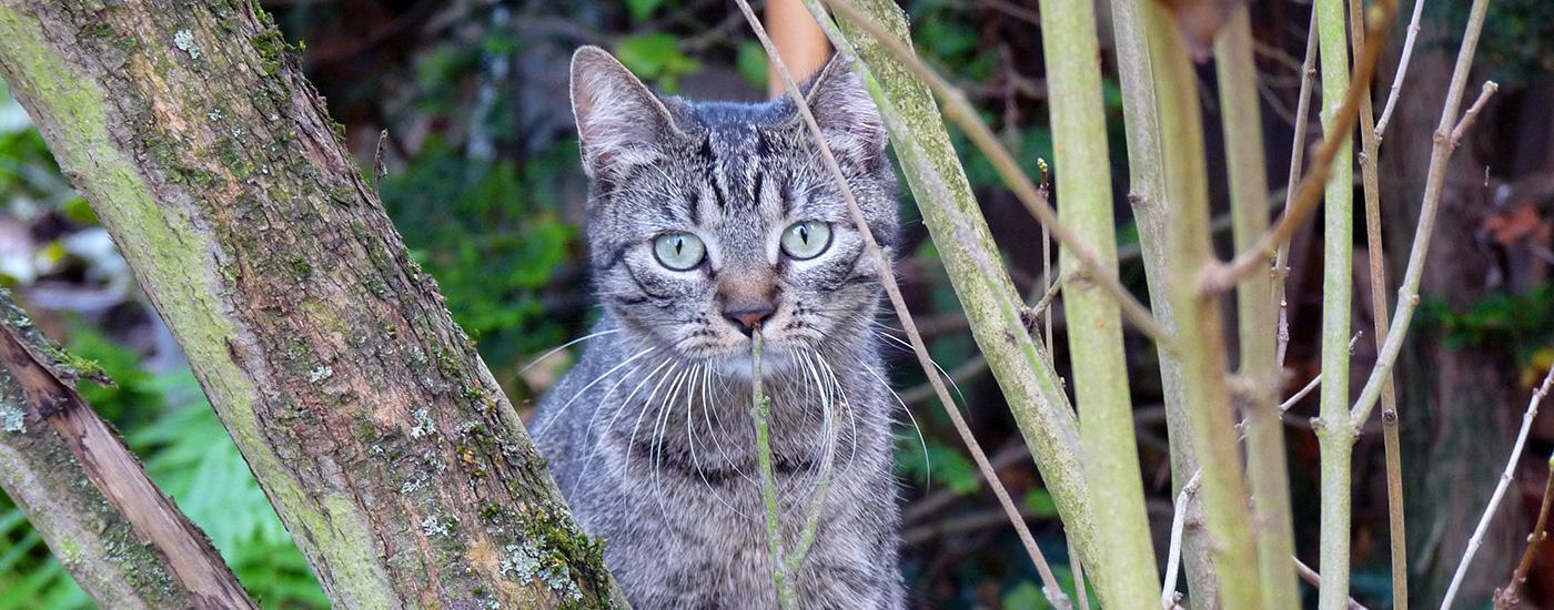 Katze-Ehrhardt-Header