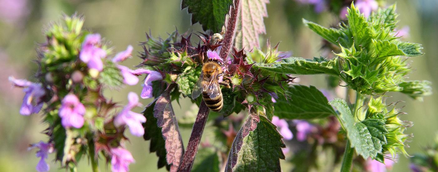 Biene-Blume-Header