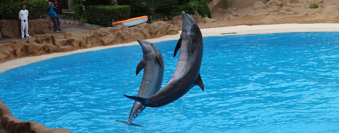 Delfine-Show-Delfinarium-Urlaub-Ausland-Header