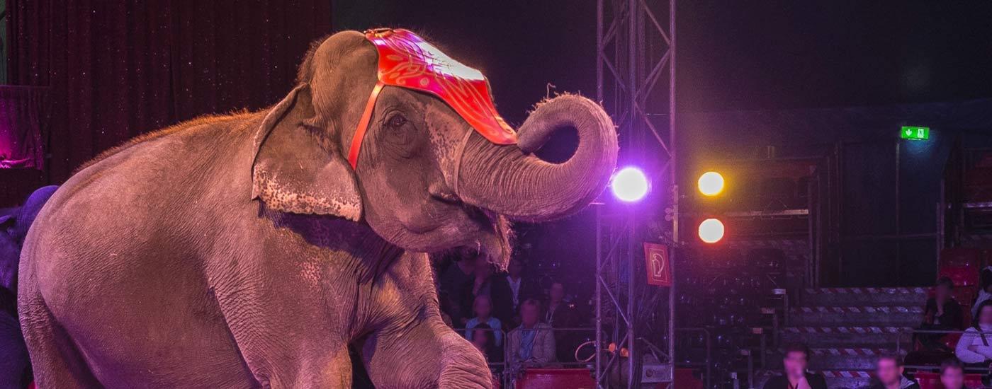 Zirkus-Elefant-Header-c-M-Marten
