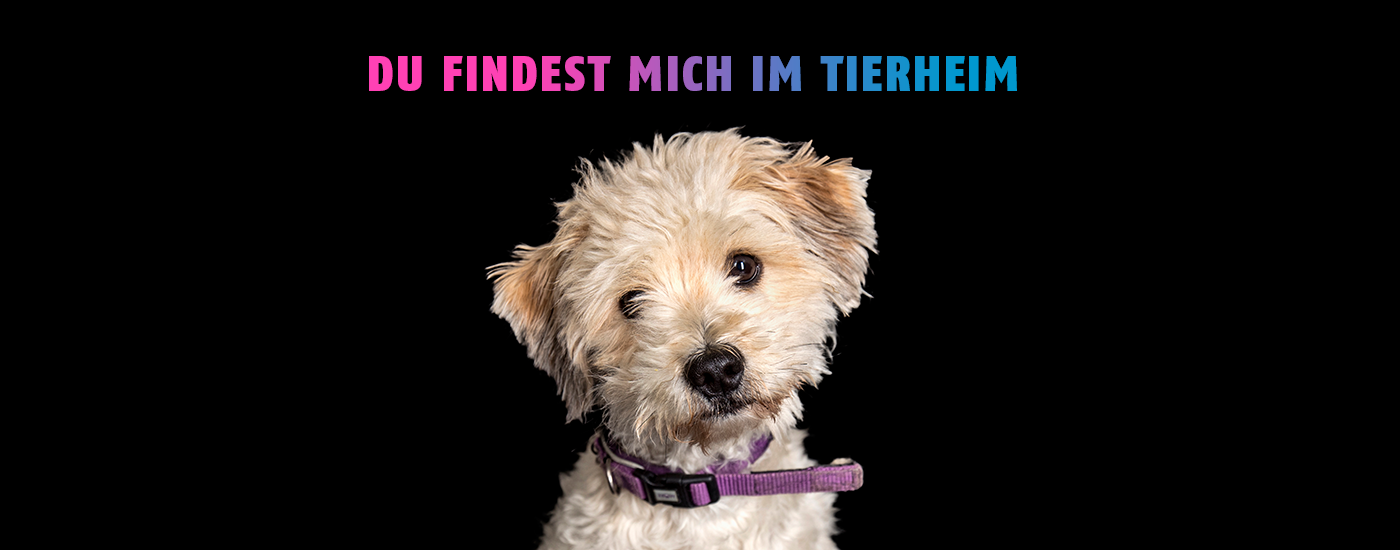 Tierheime-helfen-Hund-Header