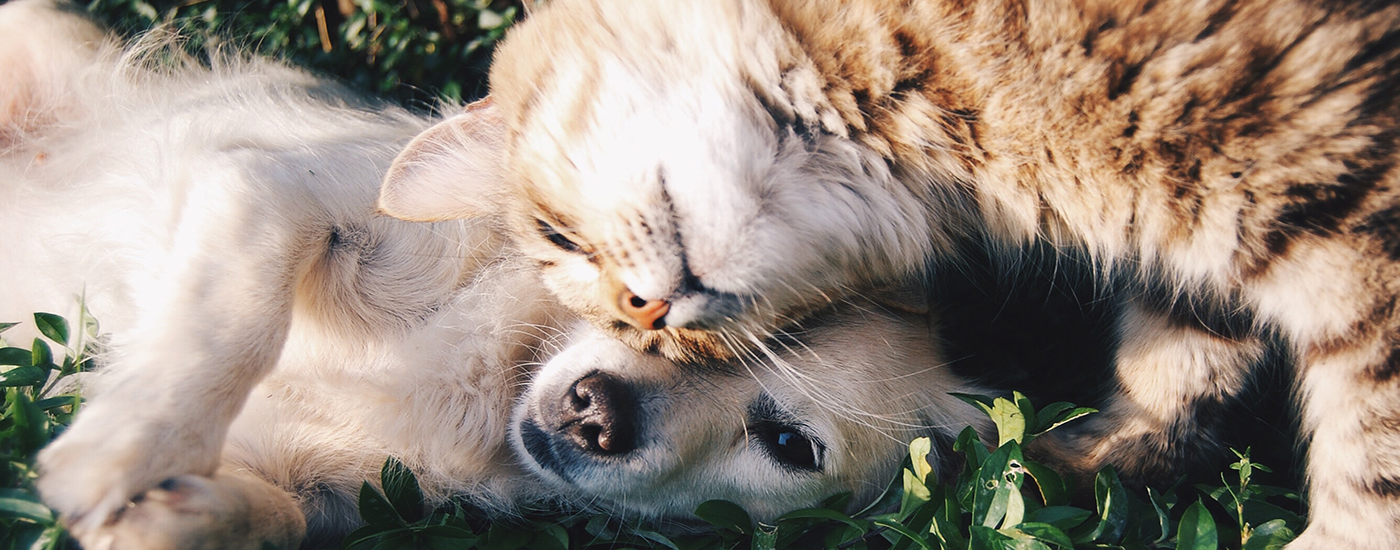 Katze und Hund kuscheln Header